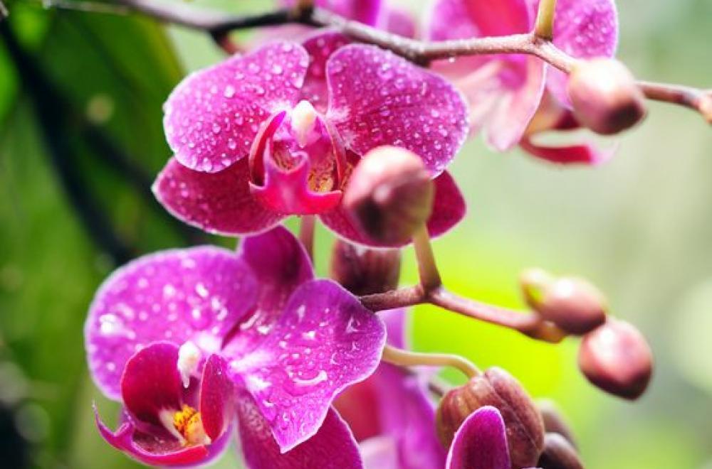 Orchidée, durant toute l'année