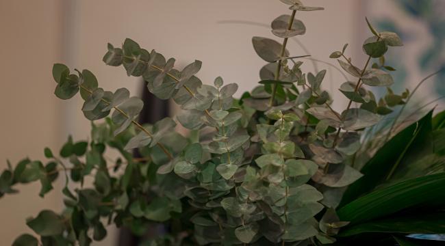 Les fleurs vertes et feuillages, touche végétale de décoration