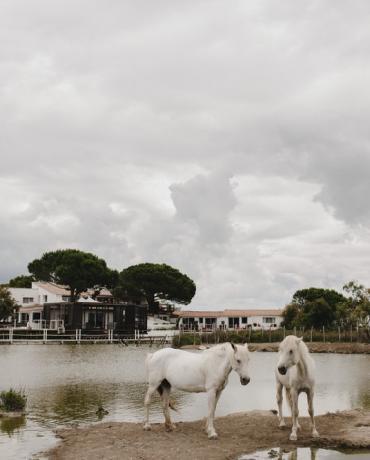 Un mariage en Camargue, One Day Event en images