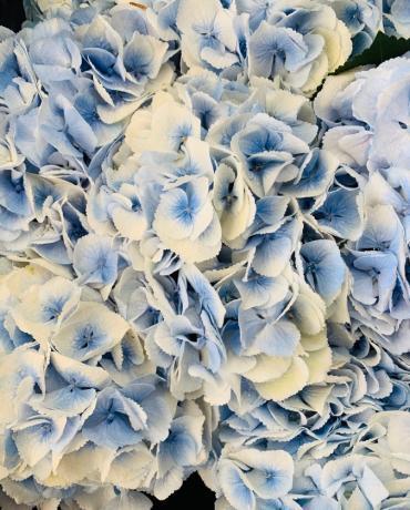 Un bleu tendre et pastel pour une décoration harmonieuse