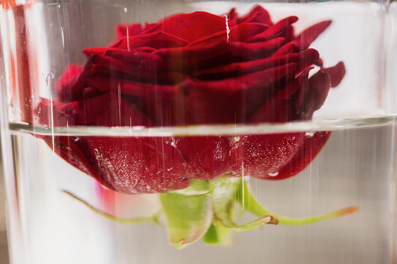 Le choix des fleurs pour son mariage mariages marseille aix en provence 13 - Decoration florale evenementiel ...